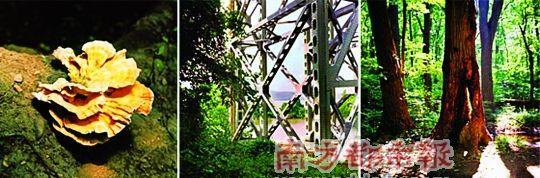 农村春天柳树图片